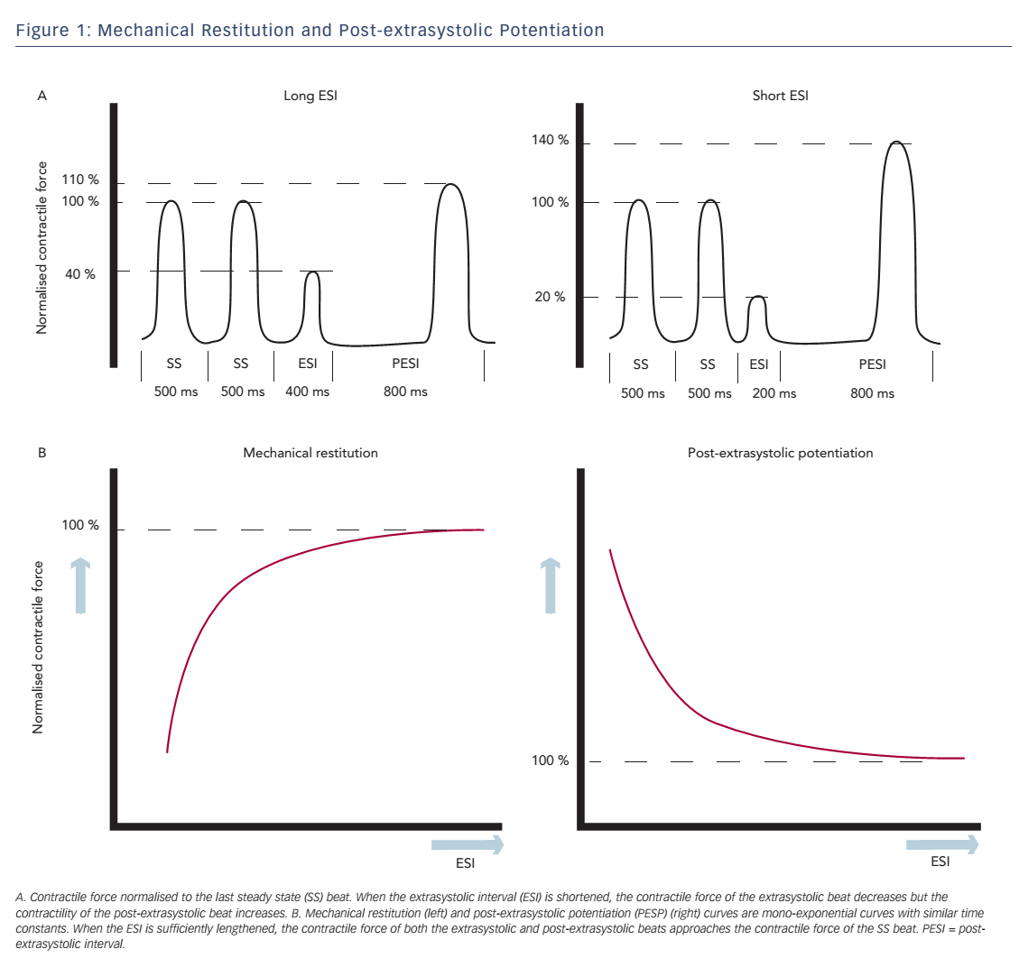 Figure 1: Mechanical Restitution and Post-extrasystolic Potentiation