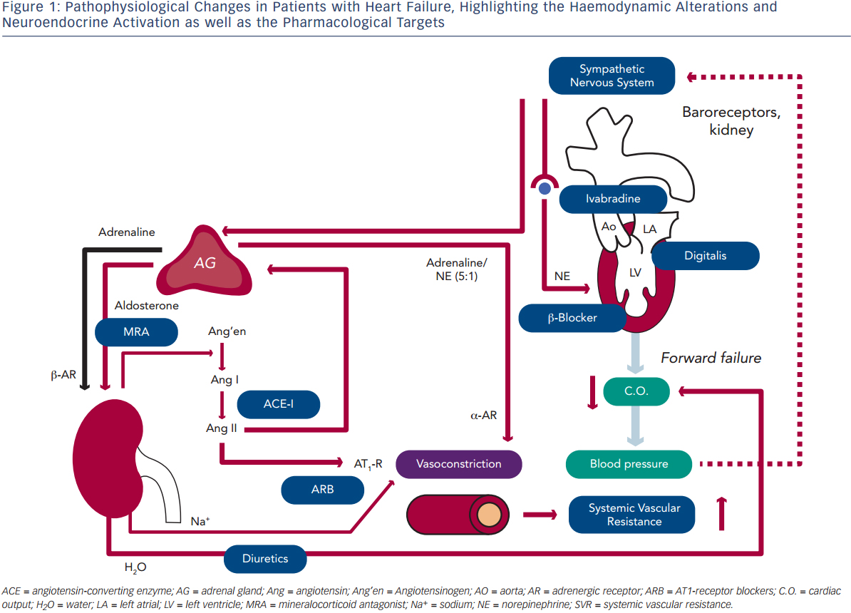 Pathophysiological Changes in Patients with Heart Failure