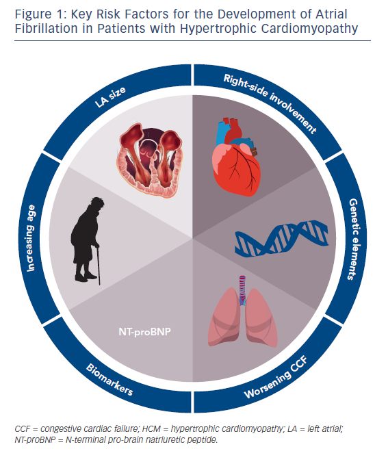 Figure 1: Key Risk Factors for the Development of Atrial Fibrillation in Patients with Hypertrophic Cardiomyopathy