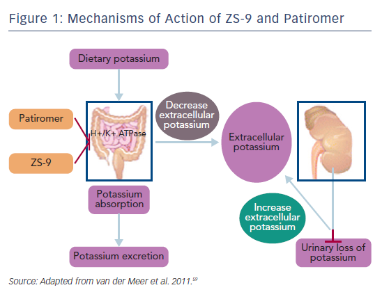 Figure 1: Mechanisms of Action of ZS-9 and Patiromer