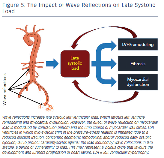 Figure 5: The Impact of Wave Reflections on Late Systolic Load