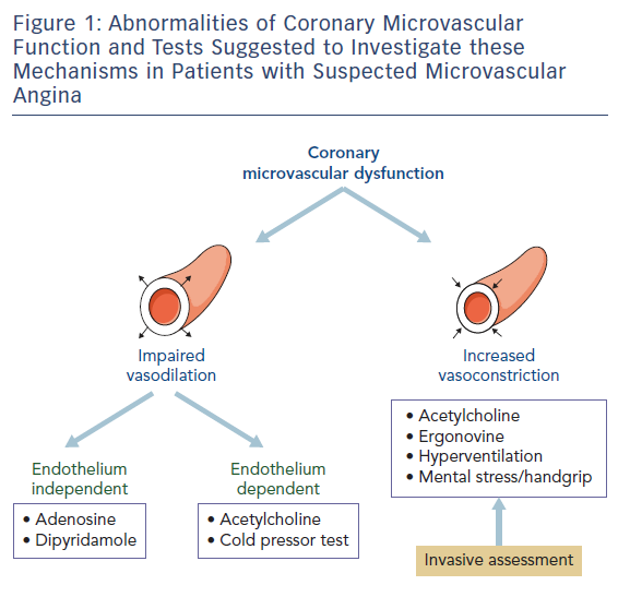 Figure 1: Abnormalities of Coronary Microvascular Function and Tests Suggested to Investigate these Mechanisms in Patients with Suspected Microvascular Angina