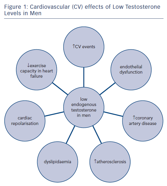 Figure 1: Cardiovascular (CV) effects of Low Testosterone<br />Levels in Men