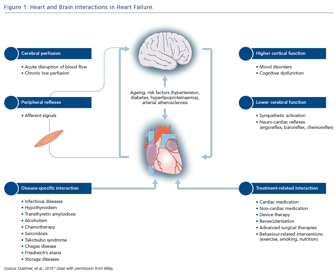 Figure 1: Heart and Brain Interactions in Heart Failure