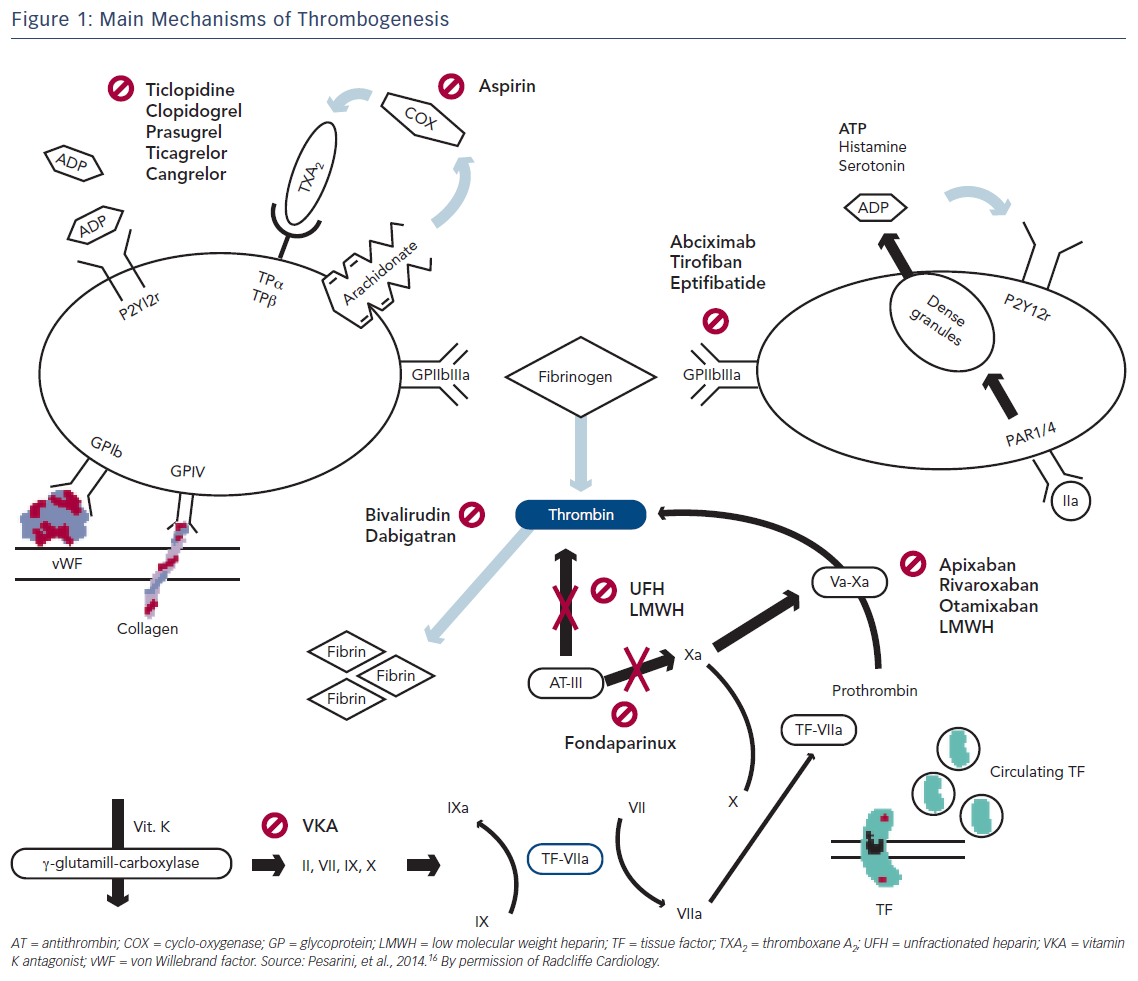 Figure 1: Main Mechanisms of Thrombogenesis