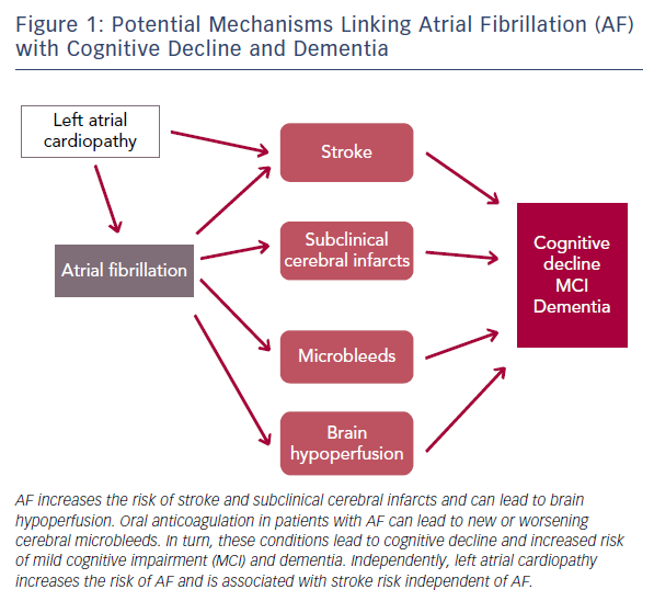 Figure 1: Potential Mechanisms Linking Atrial Fibrillation (AF) with Cognitive Decline and Dementia