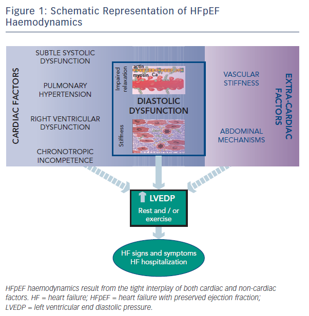 Figure 1: Schematic Representation of HFpEF Haemodynamics