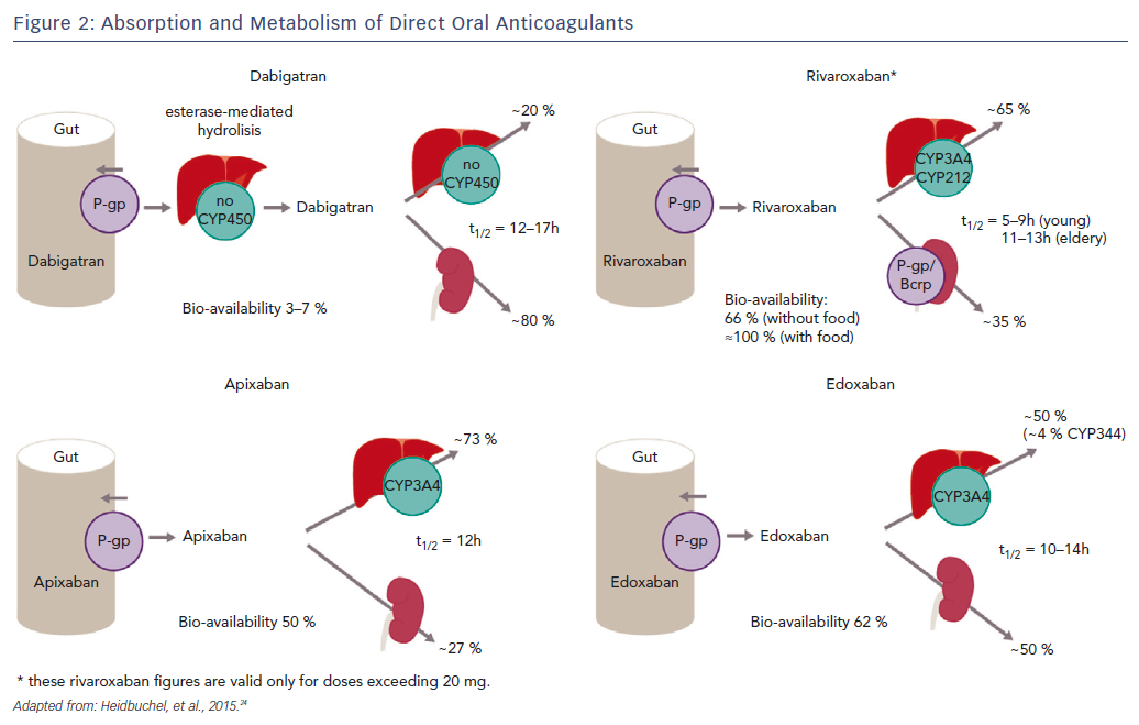 Figure 2: Absorption and Metabolism of Direct Oral Anticoagulants