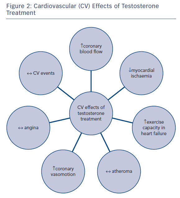 Figure 2: Cardiovascular (CV) Effects of Testosterone Treatment