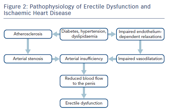 Pathophysiology of Erectile Dysfunction and Ischaemic Heart Disease