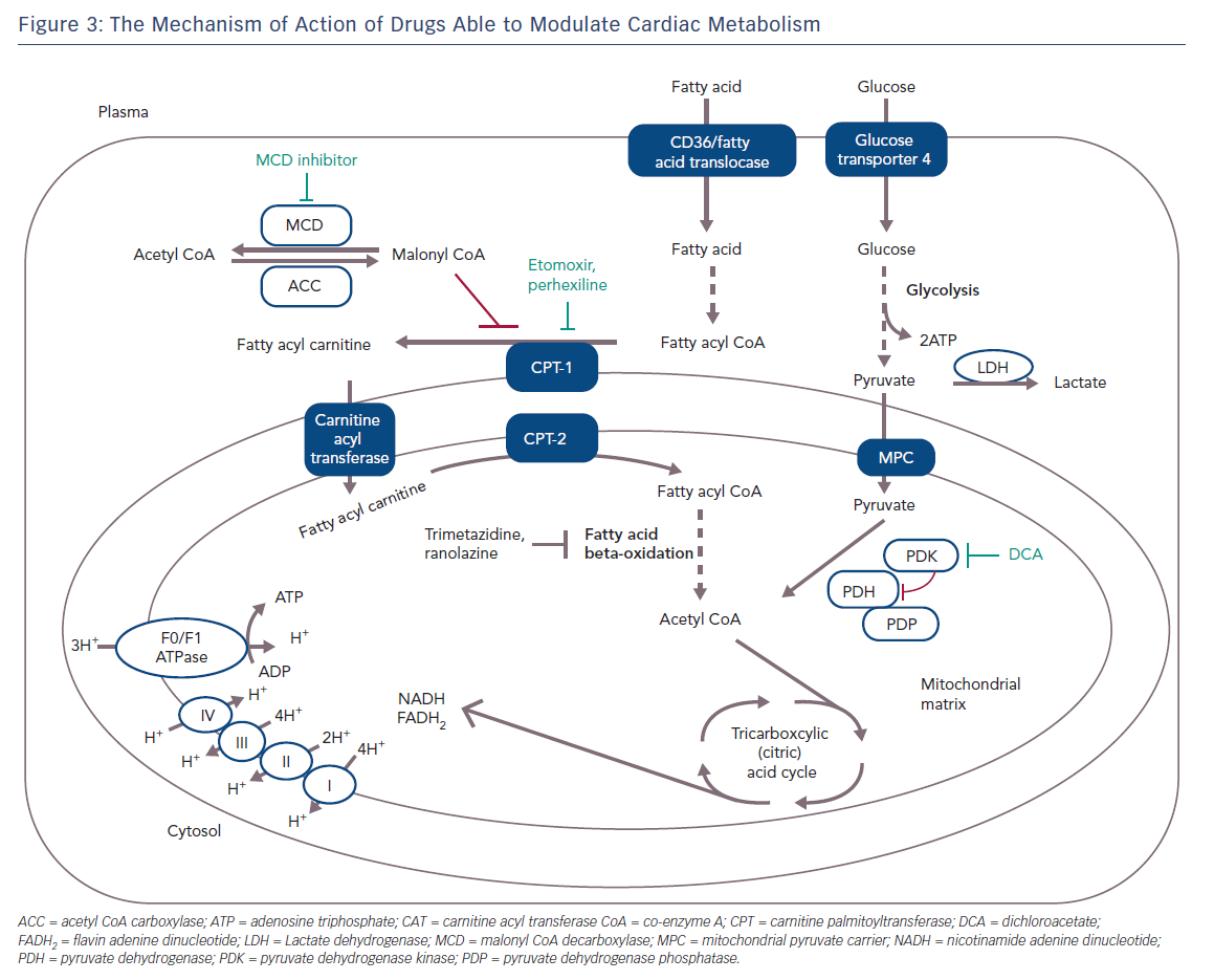 The Mechanism of Action of Drugs Able to Modulate Cardiac Metabolism