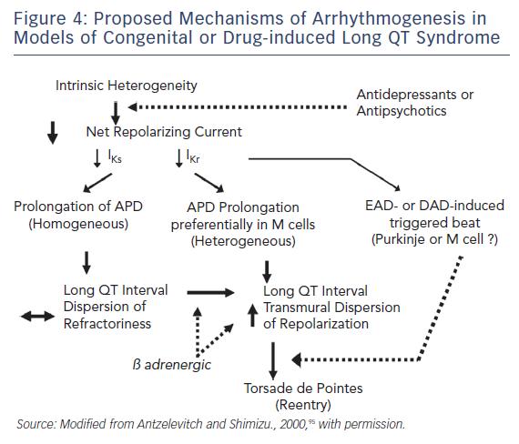 Arrhythmogenesis in Models of Congenital or Drug-inclued Long QT Syndrome