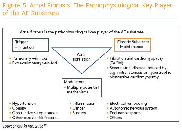 Figure 5. Atrial Fibrosis: The Pathophysiological Key Player of the AF Substrate