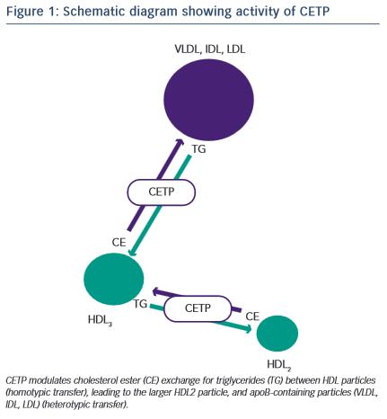 Schematic diagram showing activity of CETP