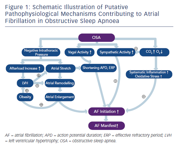 Figure 1: Schematic Illustration of Putative Pathophysiological Mechanisms Contributing to Atrial Fibrillation in Obstructive Sleep Apnoea