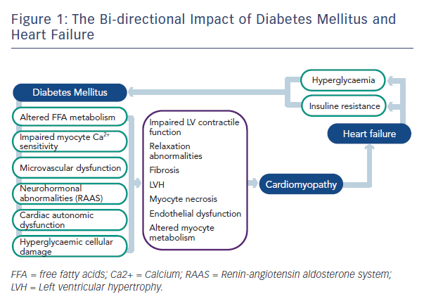 Figure 1: The Bi-directional Impact of Diabetes Mellitus and Heart Failure