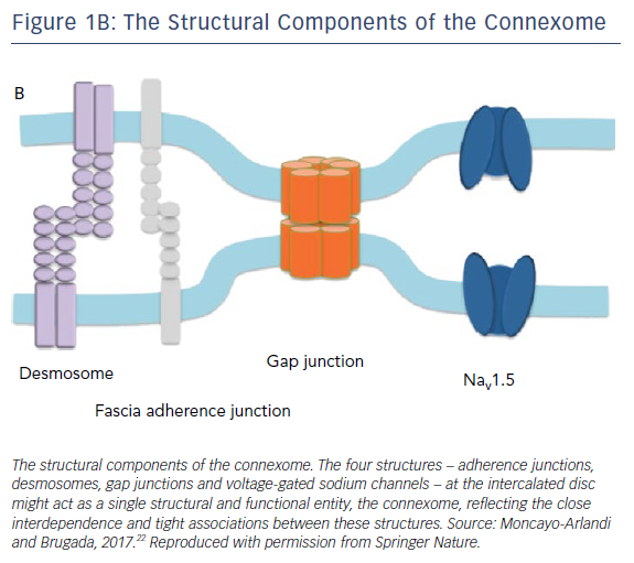 The Structural Components Of The Connexome