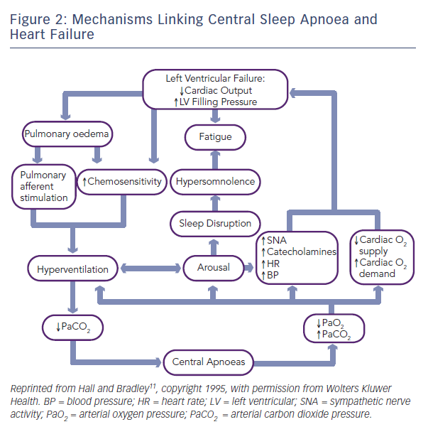 Figure 2: Mechanisms Linking Central Sleep Apnoea and Heart Failure