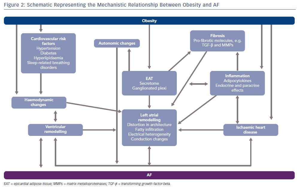 Schematic Representing The Mechanistic Relationship Between Obesity And AF