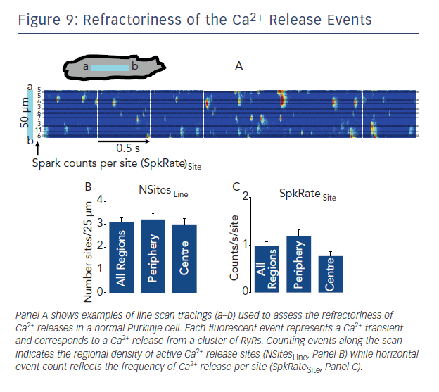 Figure 9: Refractoriness of the Ca2+ Release Events