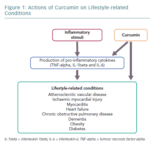 Actions of Curcumin on Lifestyle-related Conditions