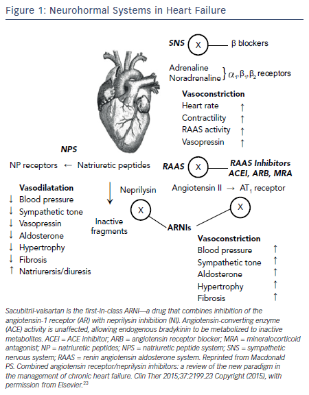 Figure 1: Neurohormal Systems in Heart Failure