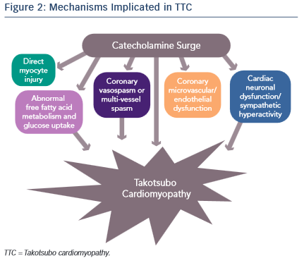 Mechanisms Implicated in TTC