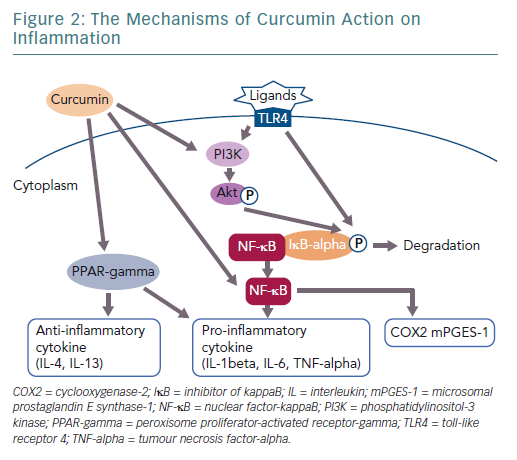 The Mechanisms of Curcumin Action on Inflammation