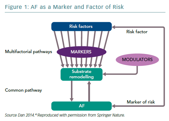 AF as a Marker and Factor of Risk