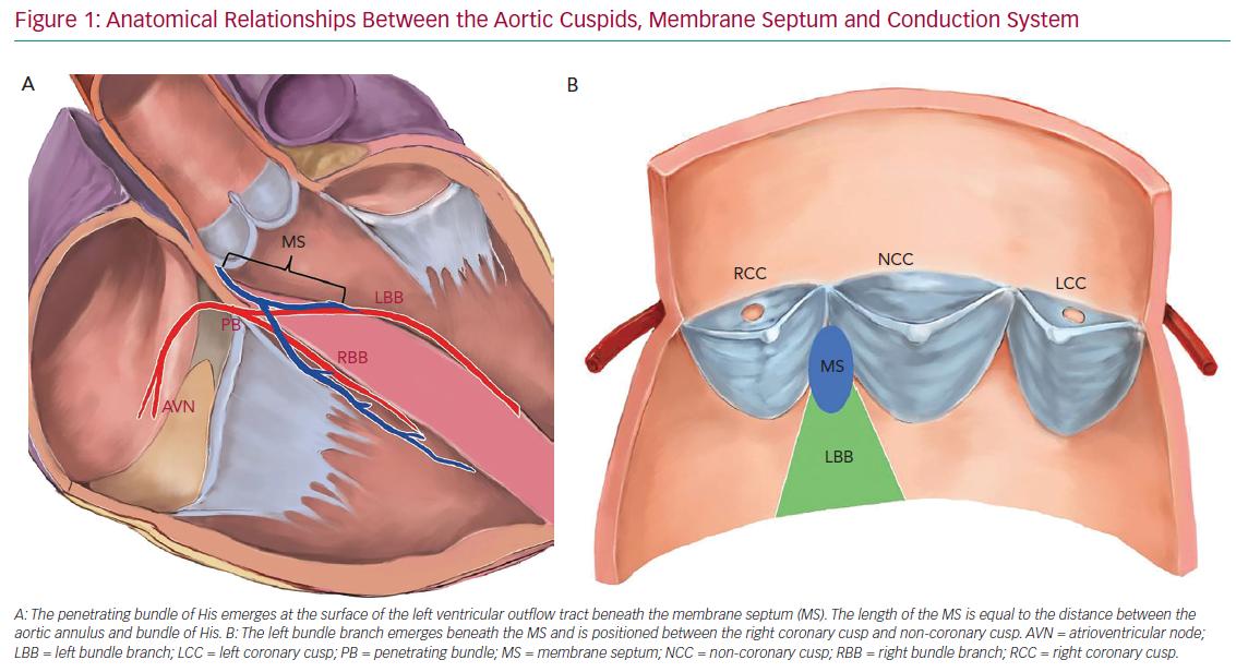 Anatomical Relationships