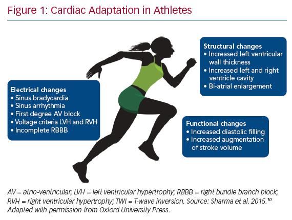 Cardiac Adaptation in Athletes