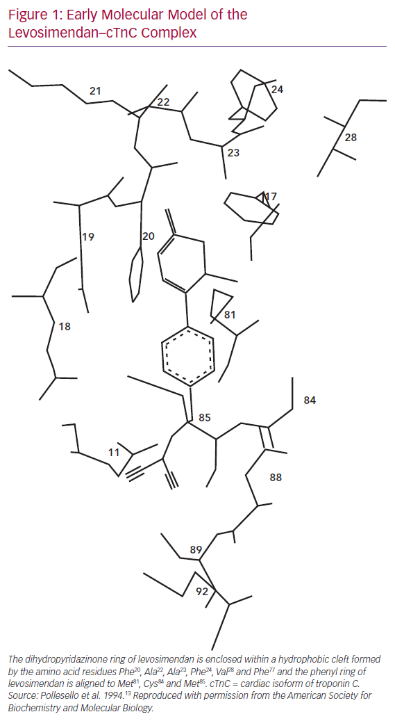 Early Molecular Model of the Levosimendan–cTnC Complex