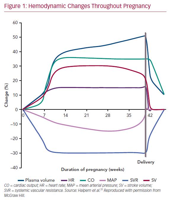 Hemodynamic Changes Throughout Pregnancy