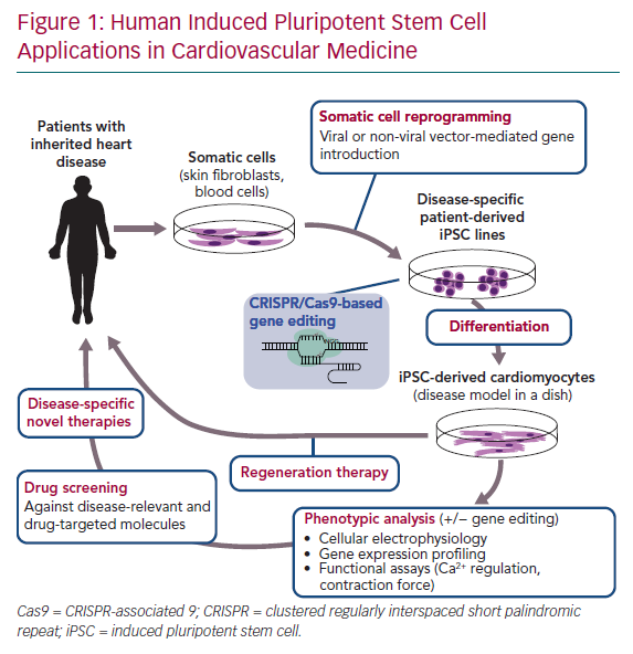 Human Induced Pluripotent Stem Cell Applications in Cardiovascular Medicine