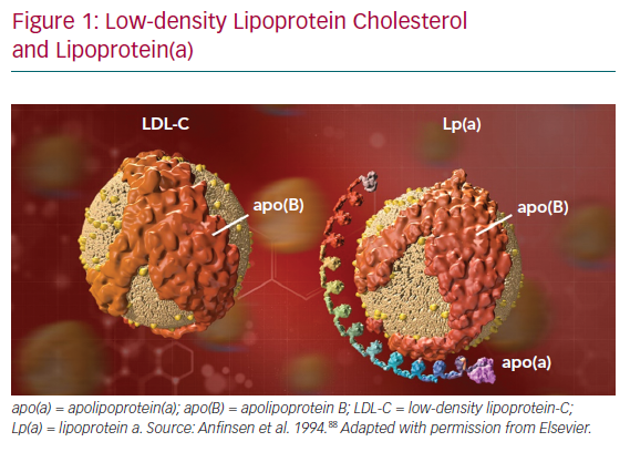 Low-density Lipoprotein Cholesterol and Lipoprotein(a)