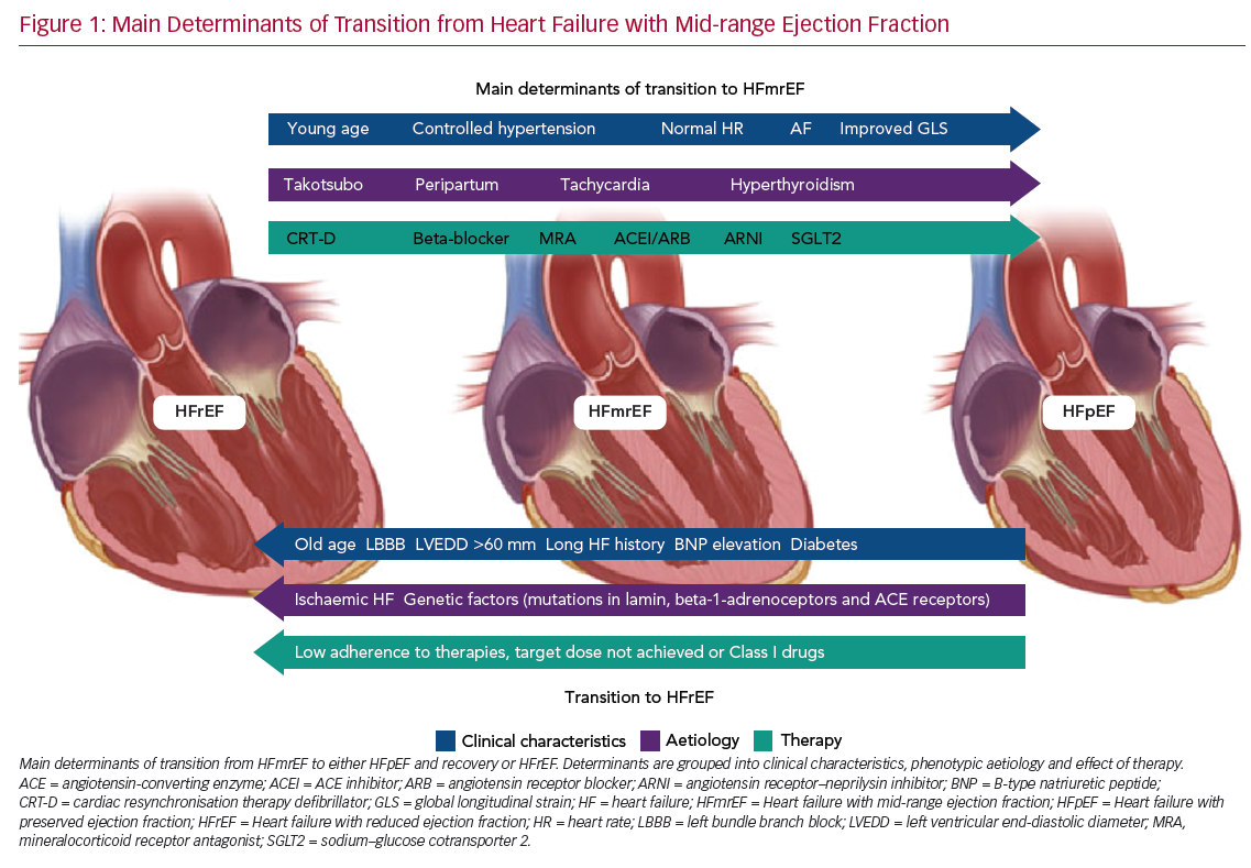 Main Determinants of Transition from Heart Failure