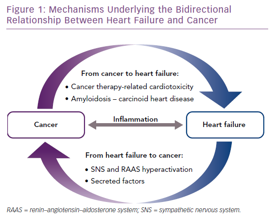 Mechanisms Underlying the Bidirectional Relationship Between Heart Failure and Cancer