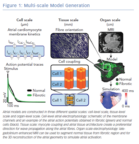 Multi-scale Model Generation