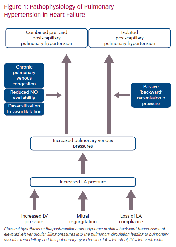 Pathophysiology of Pulmonary Hypertension in Heart Failure