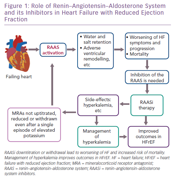 Role of Renin–Angiotensin–Aldosterone System and its Inhibitors in Heart Failure with Reduced Ejection Fraction