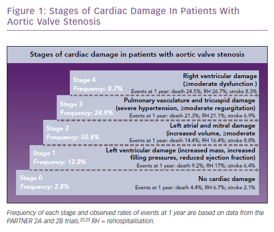 Stages of Cardiac Damage In Patients With Aortic Valve Stenosis