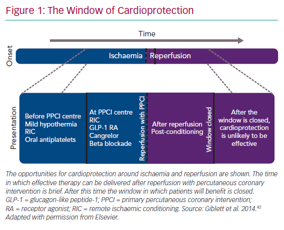 The Window of Cardioprotection