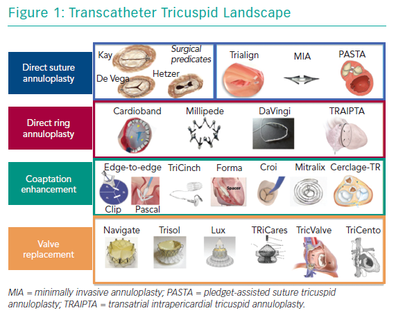 Transcatheter Tricuspid Landscape