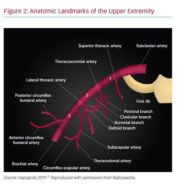 Anatomic Landmarks of the Upper Extremity