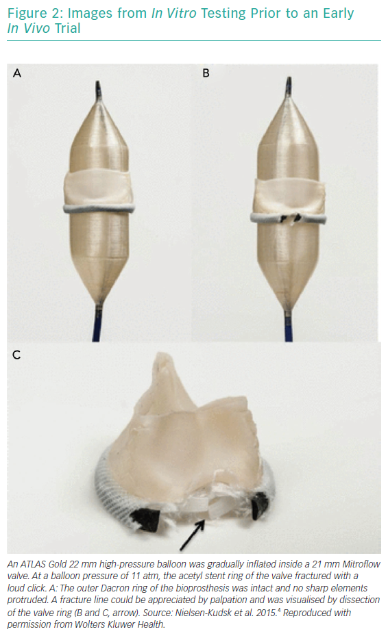 Images from In Vitro Testing Prior to an Early In Vivo Trial
