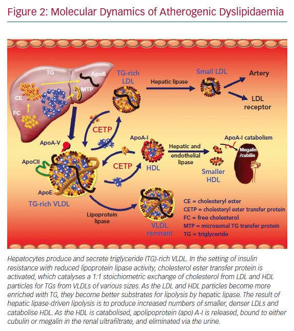 Molecular Dynamics of Atherogenic Dyslipidaemia
