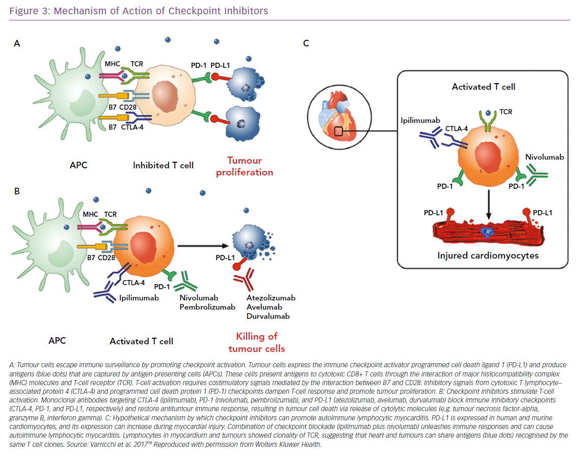 Mechanism of Action of Checkpoint Inhibitors