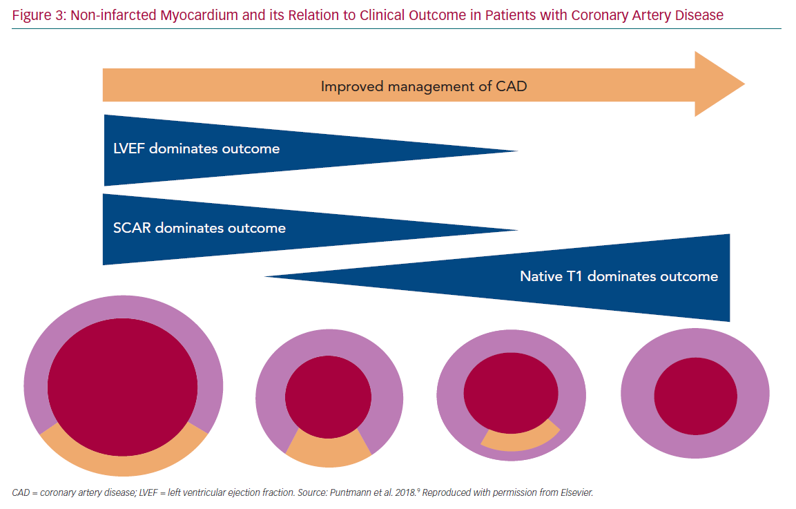 Non-infarcted Myocardium and its Relation