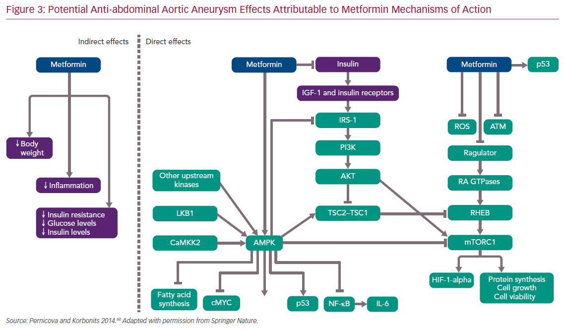 Potential Anti-abdominal Aortic Aneurysm