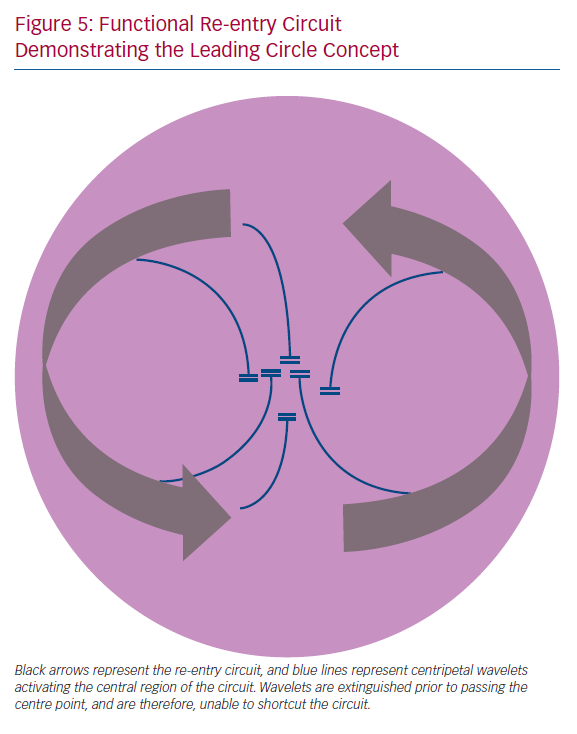 Functional Re-entry Circuit Demonstrating the Leading Circle Concept